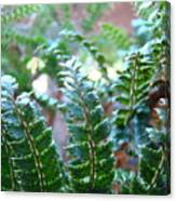 Fern Art Prints Green Sunlit Forest Ferns Giclee Baslee Troutman Canvas Print