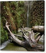 Fern Canyon Creek Canvas Print