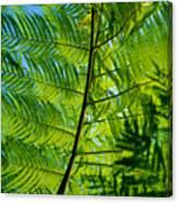 Fern Detail Canvas Print