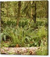 Fern Forest Canvas Print