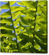 Fern Fronds Against Blue Sky Canvas Print