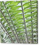 Fern Fronds Canvas Print
