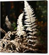 Fern Glow 2 Canvas Print