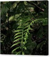 Fern Green Canvas Print