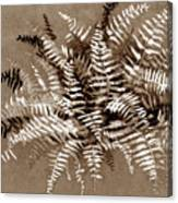 Fern In Sepia Canvas Print