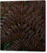 Fern Kaleidescope Canvas Print