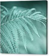 Fern Leaves Abstract 1. Nature In Alien Skin Canvas Print