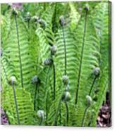 Fern Meet And Greet Canvas Print