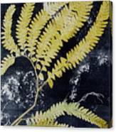 Fern Monoprint Canvas Print