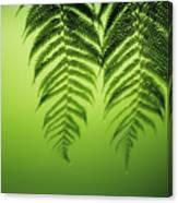 Fern On Green Canvas Print