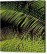 Fern-palm Abtract Canvas Print