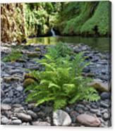 Ferns Along Banks Of Eagle Creek Canvas Print