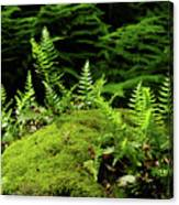 Ferns And Moss On The Ma At Canvas Print