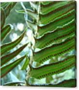 Ferns Art Prints Green Forest Fern Sunlit Giclee Baslee Troutman Canvas Print