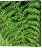 Ferns Au Naturale Canvas Print