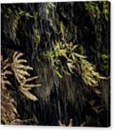 Ferns Below Falls By Jean Noren Canvas Print