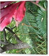 Ferns Come Alive Canvas Print