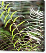Ferns In Natural Light Canvas Print