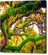 Ferns On Florida Oaks Canvas Print
