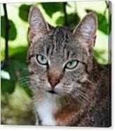 Ferocious Cat Canvas Print