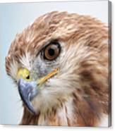 Ferruginous Hawk Canvas Print
