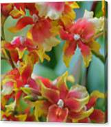 Festive Orchids Canvas Print