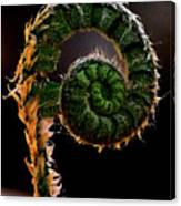 Fiddlehead Canvas Print