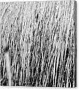 Field Grasses Canvas Print