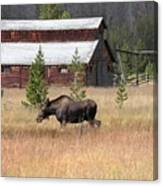 Field Moose Canvas Print