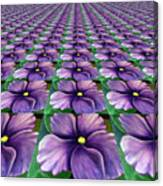 Field Of African Violets Canvas Print