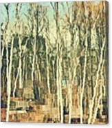 Field Of Birch Canvas Print