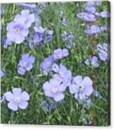 Field Of Blue Canvas Print