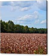 Field Of Cotton Balls Canvas Print