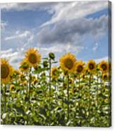 Field Of Dreams Panorama Canvas Print