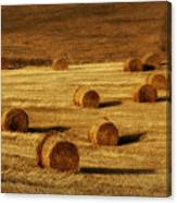 Field Of Gold #1 Canvas Print