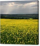 Field Of Gold Sherbrooke Quebec Canada Canvas Print