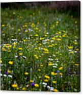 Field Of Mixed Flowers Canvas Print