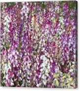 Field Of Multi-colored Flowers Canvas Print