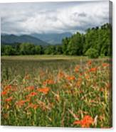 Field Of Orange Daylilies Canvas Print
