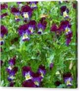 Field Of Pansy's Canvas Print