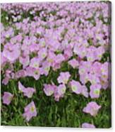 Field Of Primrose Canvas Print