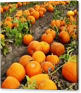Field Of Pumpkins Card Canvas Print