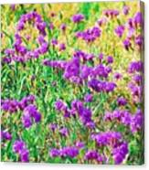 Field Of Purple Flowers Canvas Print