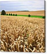 Field Of Wheat Canvas Print