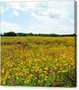 Field Of Wildflowers Canvas Print