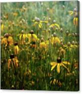 Field Of Yellow 2498 Idp_2 Canvas Print
