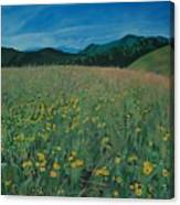 Field Of Yellow Flowers Canvas Print