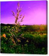 Field Rye And Ear Canvas Print