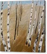 Field With Birches Canvas Print