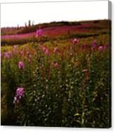 Fields In Pink Canvas Print